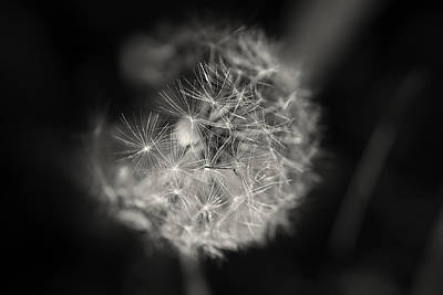 Photograph - Wishes by Sarah Boyd