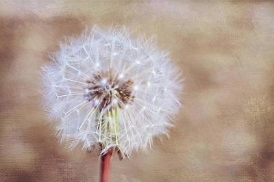 Photograph - Wishing by Melanie Alexandra Price