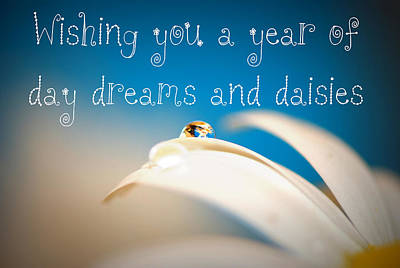 Photograph - Wishing You A Year Of Day Dreams And Daisies Card by Lisa Knechtel