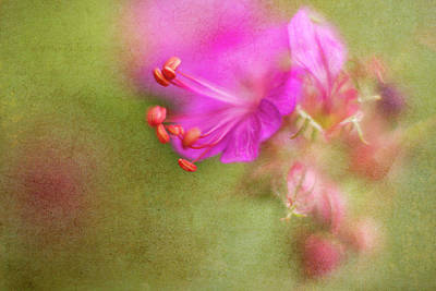 Macro Geranium Flower Photograph - Wisp Of Spring by Sharon Johnstone