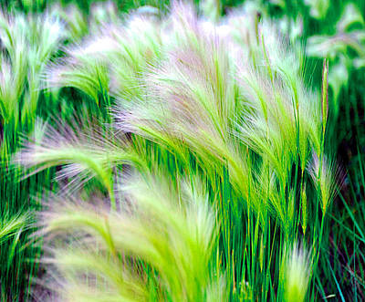 Photograph - Wispy Green by Richard Gehlbach