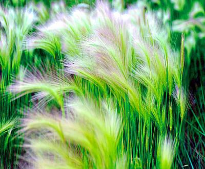 Wispy Green Art Print