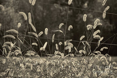 Photograph - Wispy by Joanne Coyle