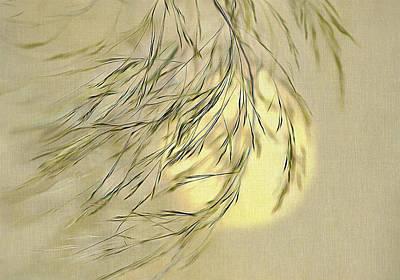 Digital Art - Wispy Sunset-1 by Nina Bradica