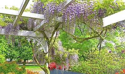 Photograph - Wistaria On Pergola by Nareeta Martin