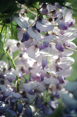 Photograph - Wisteria 2 by Gordon Mooneyhan