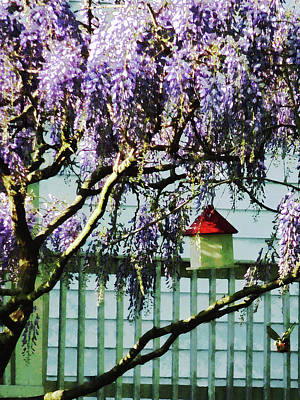 Photograph - Wisteria And Birdhouse by Susan Savad