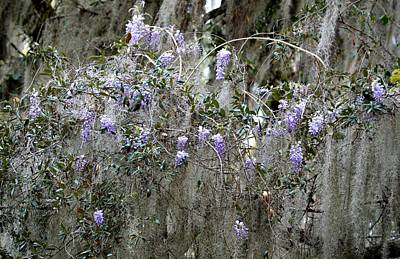 Photograph - Wisteria And Spanish Moss by rd Erickson