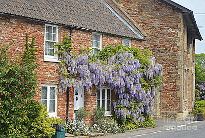 Photograph - Wisteria by Andy Thompson