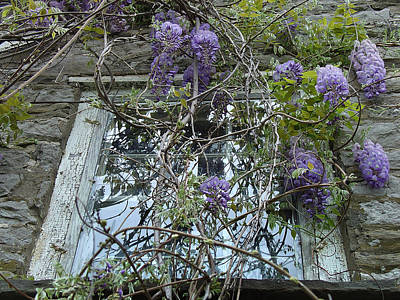 Photograph - Wisteria At A Poet's Window by Terrance De Pietro