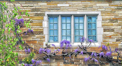 Photograph - Wisteria At Yale University by Dave Mills