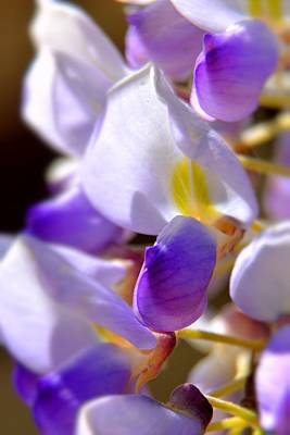 Photograph - Wisteria Beauty by Lisa Wooten