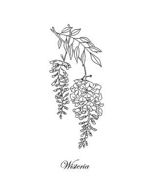 Drawing - Wisteria. Botanical by Masha Batkova