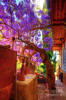 Photograph - Wisteria Canopy In Bisbee Arizona by Charlene Mitchell