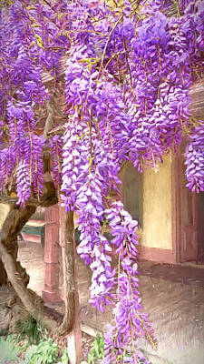 Photograph - Wisteria Cascade by Susan Rissi Tregoning