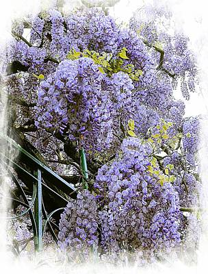 Photograph - Wisteria Clouds by Dorothy Berry-Lound