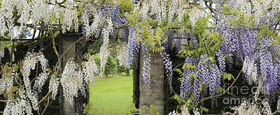 Entrance Door Photograph - Wisteria Doorway by Tim Gainey