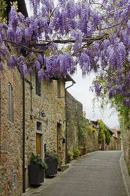 Wisteria In Bloom Photograph - Wisteria Draped Over The Streets Of Vinci, Italy by Shelley Dennis