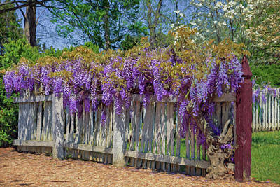 Photograph - Wisteria Fence by Jerry Gammon