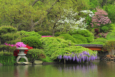Wisteria In Bloom Photograph - Wisteria In A Japanese Garden by Greg Matchick