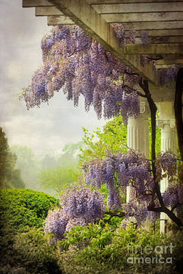 Wisteria In A Spring Shower Two Art Print by Susan Isakson