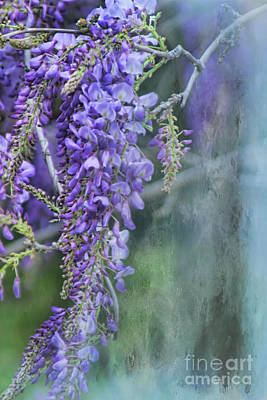 Photograph - Wisteria by Joan Bertucci