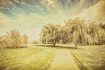 Wisteria In Bloom Photograph - Wisteria Lane by Jorgo Photography - Wall Art Gallery