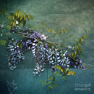 Photograph - Wisteria by Liz  Alderdice