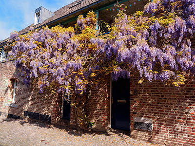 Limburg Photograph - Wisteria Over A Doorway In Old Town Maastricht Netherlands by Louise Heusinkveld