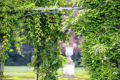 Photograph - Wisteria Pergola In Park Of De Haar Castle  by Jenny Rainbow