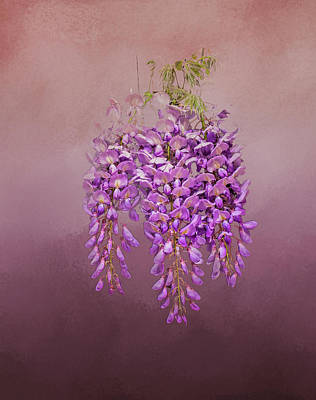 Photograph - Wisteria by Phyllis Taylor