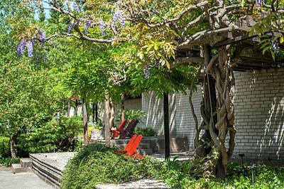 Photograph - Wisteria Shadow. Wisteria Shadow. Botanical Garden Mendelu by Jenny Rainbow