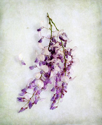 Print featuring the photograph Wisteria Still Life by Louise Kumpf