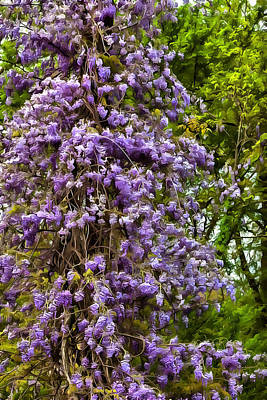Photograph - Wisteria Tree by CarolLMiller Photography