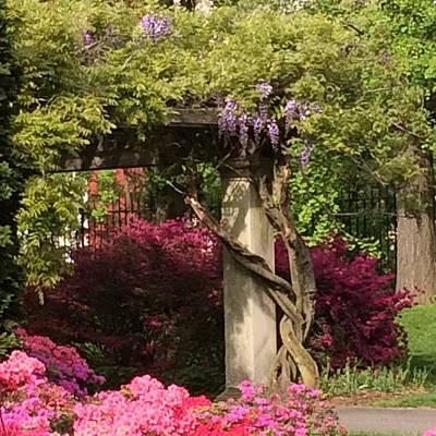 Wisteria Trellis Flora Landscape 5.11.17  Original