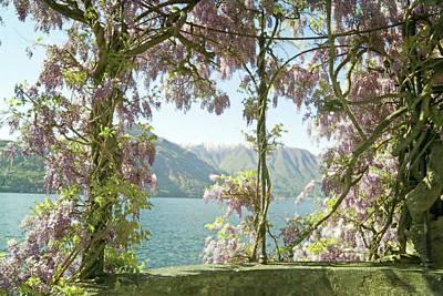 Lake Como Photograph - Wisteria Trellis Lago Di Como by Brooke T Ryan