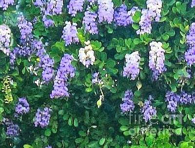 Photograph - Wisteria Up Close by Janette Boyd