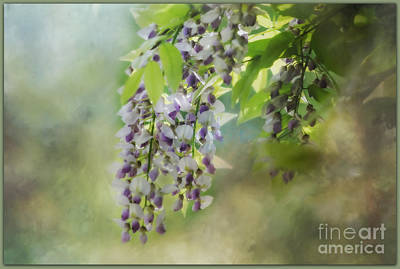 Photograph - Wisteria Vines by Brenda Bostic