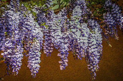 Photograph - Wisteria Vines by Connie Cooper-Edwards