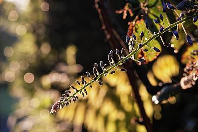 Photograph - Wisterian Morn 1 by Richard Thomas