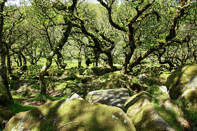 Photograph - Wistman's Wood Scene by Mike Finding