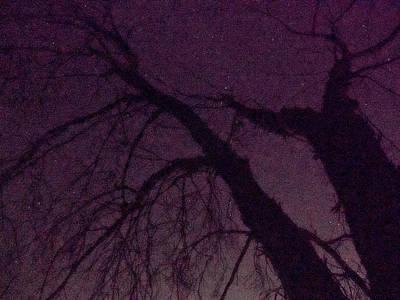 Photograph - Witch Tree by Derek Dean