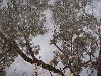 Photograph - Witchy Tree by Strangefire Art Scylla Liscombe