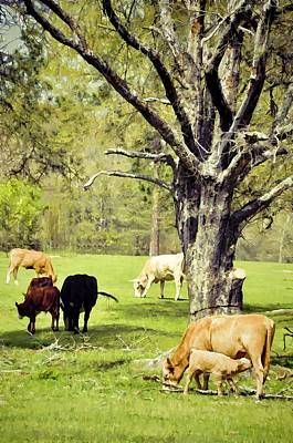Photograph - With Their Calves by Jan Amiss Photography