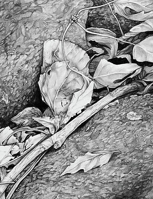 Art Print featuring the drawing Withered Leaves by Aaron Spong
