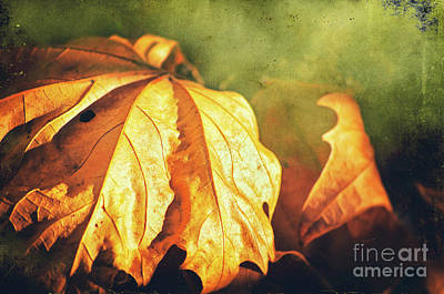 Photograph - Withered Leaves by Silvia Ganora