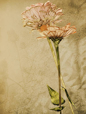 Withered Art Print by Sally Engdahl