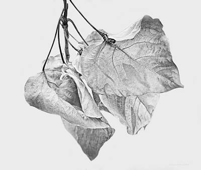 Photograph - Withering Leaves Black And White by Jennie Marie Schell