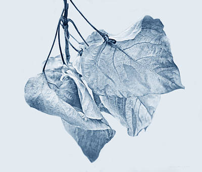 Photograph - Withering Leaves Blue by Jennie Marie Schell