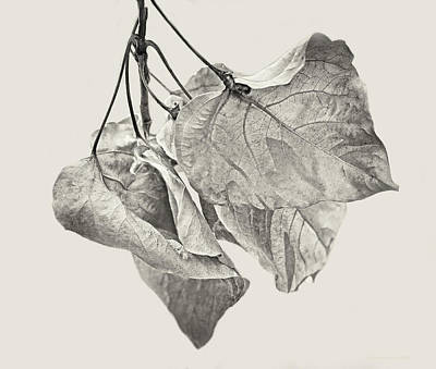 Photograph - Withering Leaves Sepia by Jennie Marie Schell